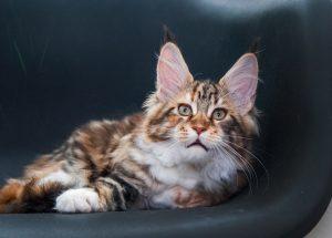 фото котенок