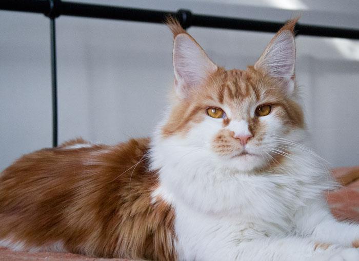 кошки фото кун