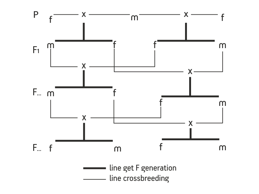 Crossbreeding cousins