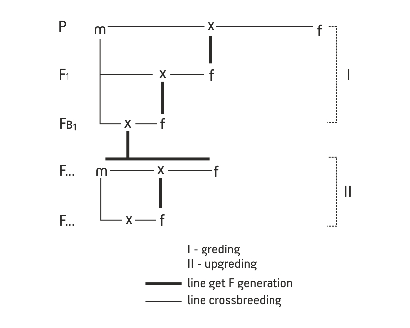 Grading_upgrading