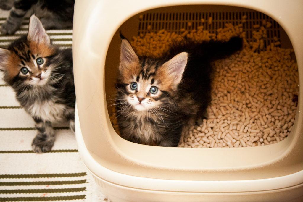 KAO cat litter